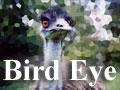 Bird Eye 無料写真・加工・フォトショップ